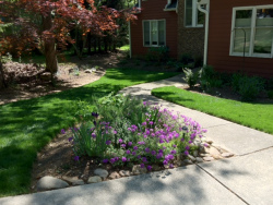 Turf Type Tall Fescue with Flower Garden