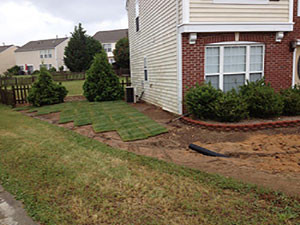 Sod Aeration & Seeding
